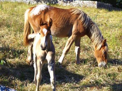 """""""A Cavallo sulla Pietra Serena"""" Quarta Edizione – Pietra Serena Calamini Urbano"""